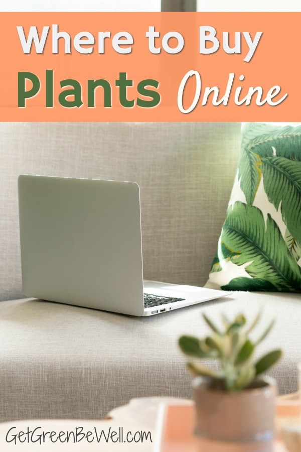 computer laptop on beige couch with leaf pillow and succulent indoor houseplant on table