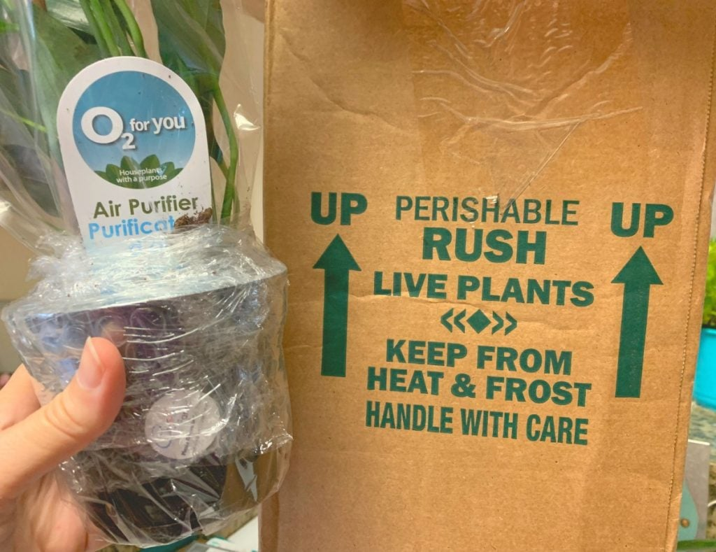 plant in black pot wrapped in plastic next to box from best place to buy indoor plants online