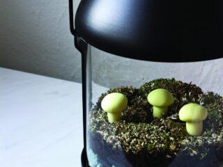 Glow in the Dark Lantern Terrarium with charcoal moss lichens