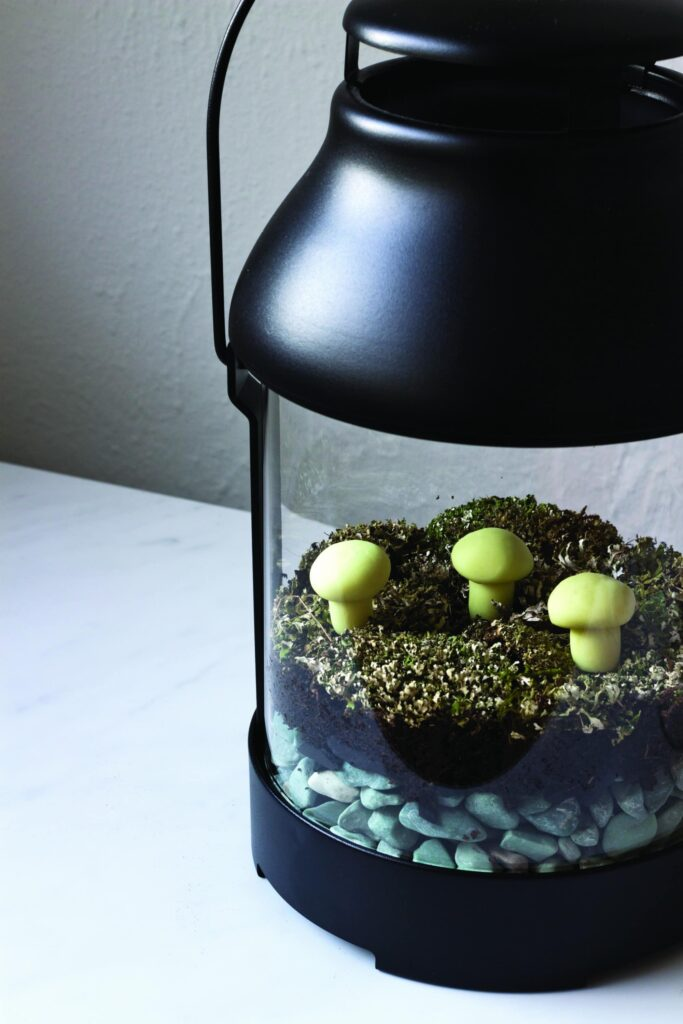 Glow in the Dark Lantern Terrarium with charcoal moss lichens