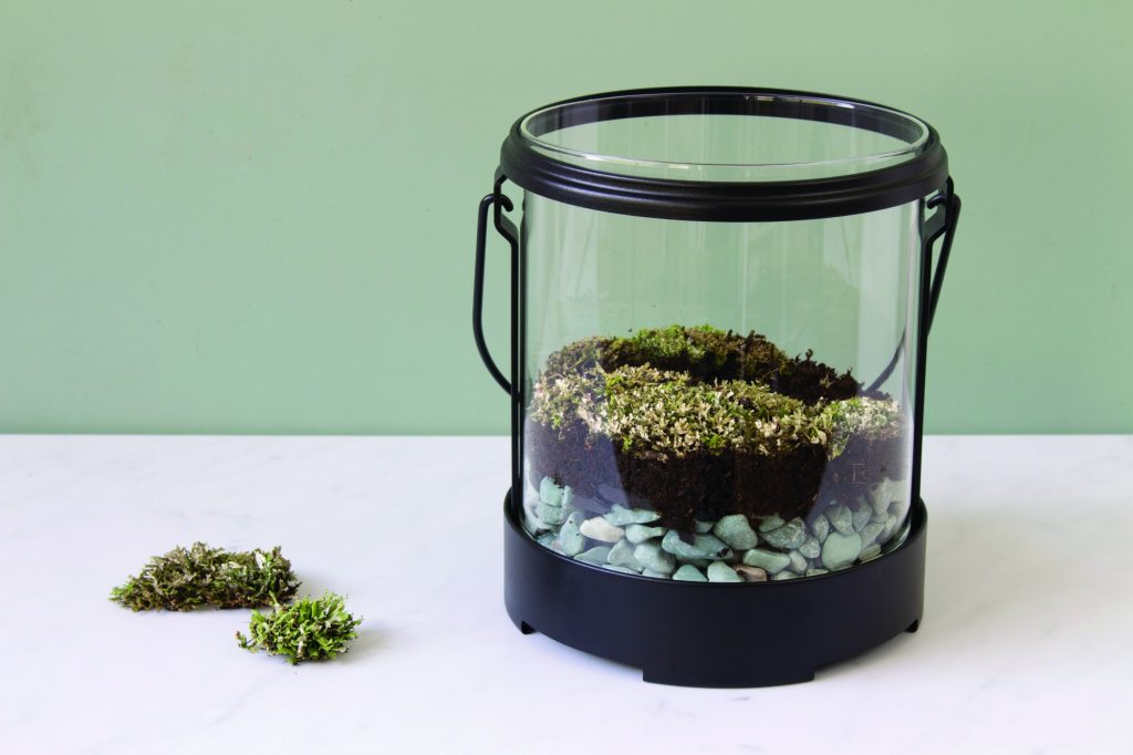 lichens in glow in the dark terrarium lantern