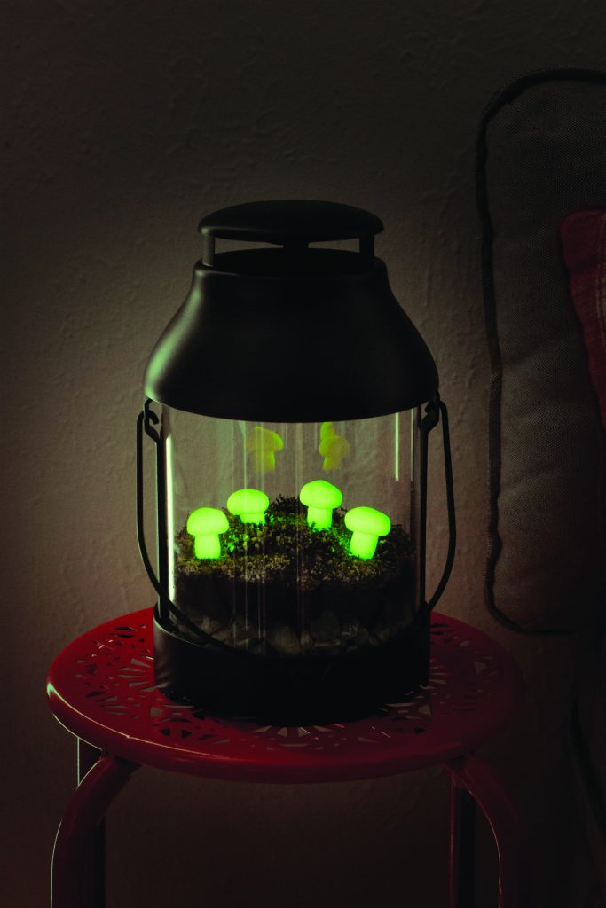 Glow in the Dark Lantern Terrarium at Night with mushrooms charcoal