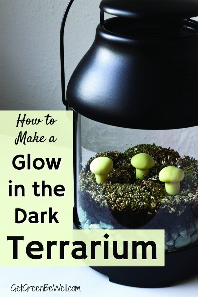 Glow in the dark terrarium with moss and mushrooms