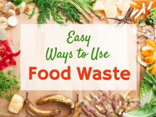 food waste scraps