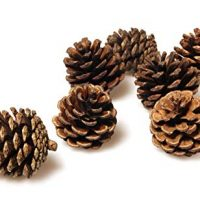 Pinecones Bulk - 50 Pine Cones in Bulk for Crafts, Natural, Unscented!