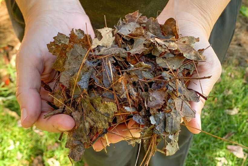 leaves shredded into small pieces