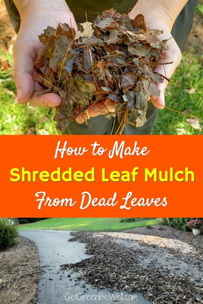 woman holding shredded leaf mulch