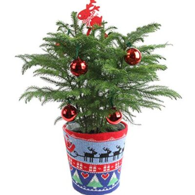 Best Christmas Houseplant Gifts 2019