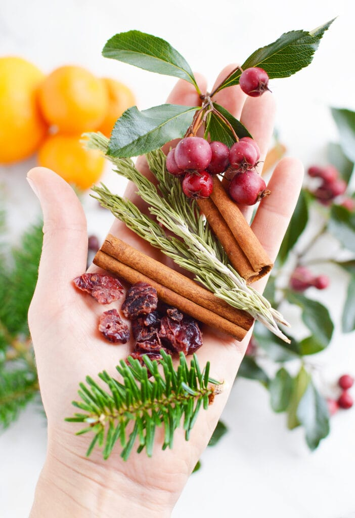 womans hand holding cinnamon sticks evergreen branches and cinnamon sticks against white background