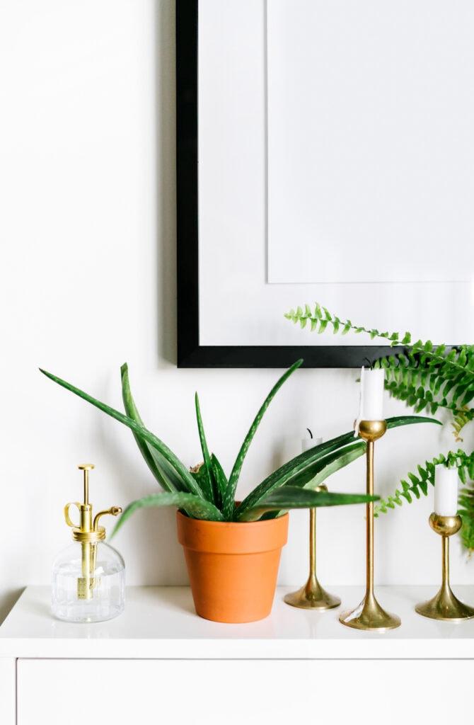 aloe vera plant in clay pot on white dresser