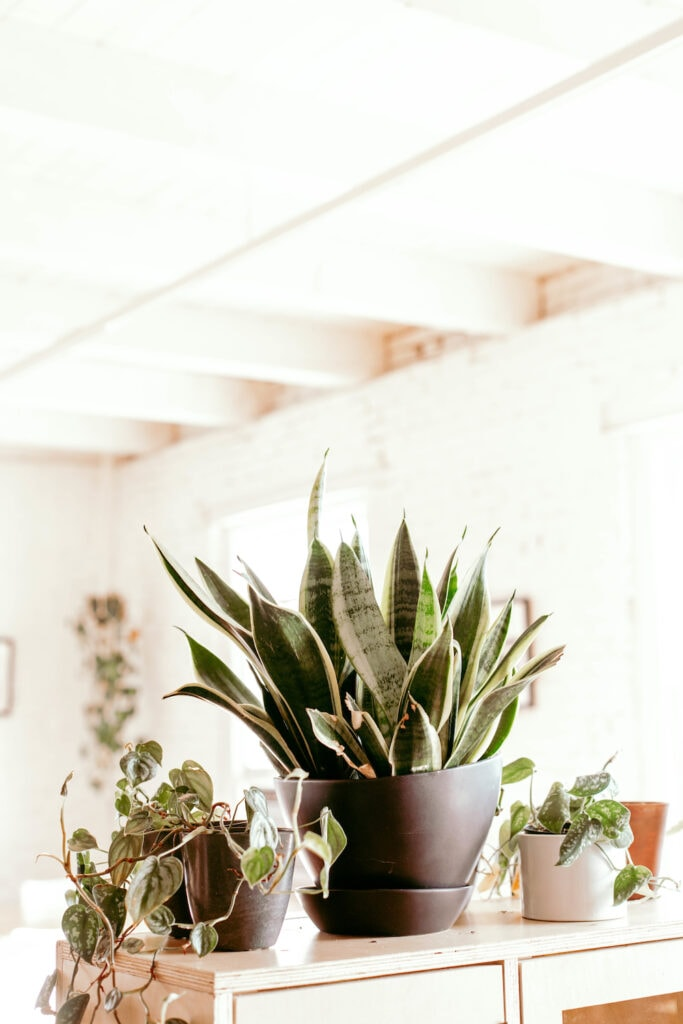 houseplants on a shelf in a bright room indoors