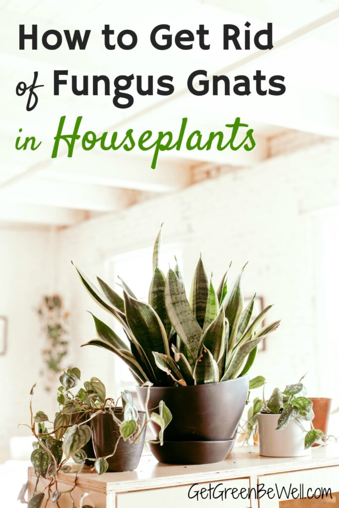 how to get rid of fungus gnats in houseplants indoors
