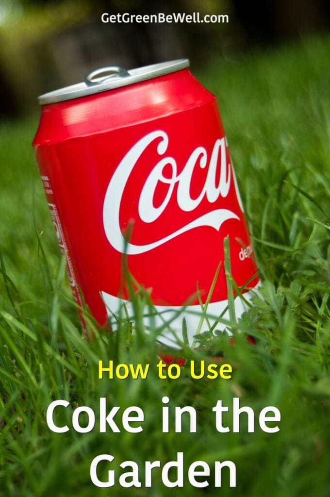 red can of Coke in green grass
