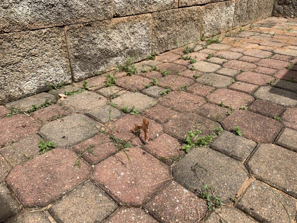 patio bricks with weeds growing in-between
