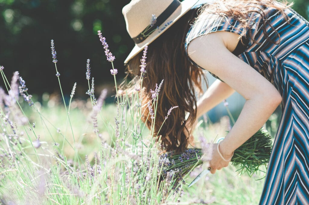 woman wearing a hat picking lavender flowers in a field