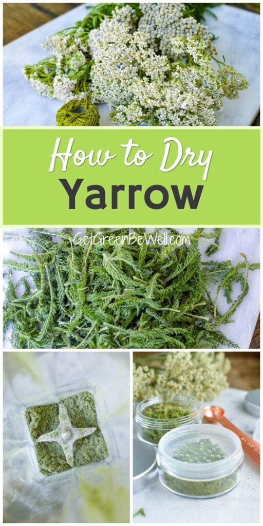 yarrow plants
