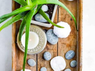 overhead view of plant in wooden tray surrounded by painted rocks and white pom pots